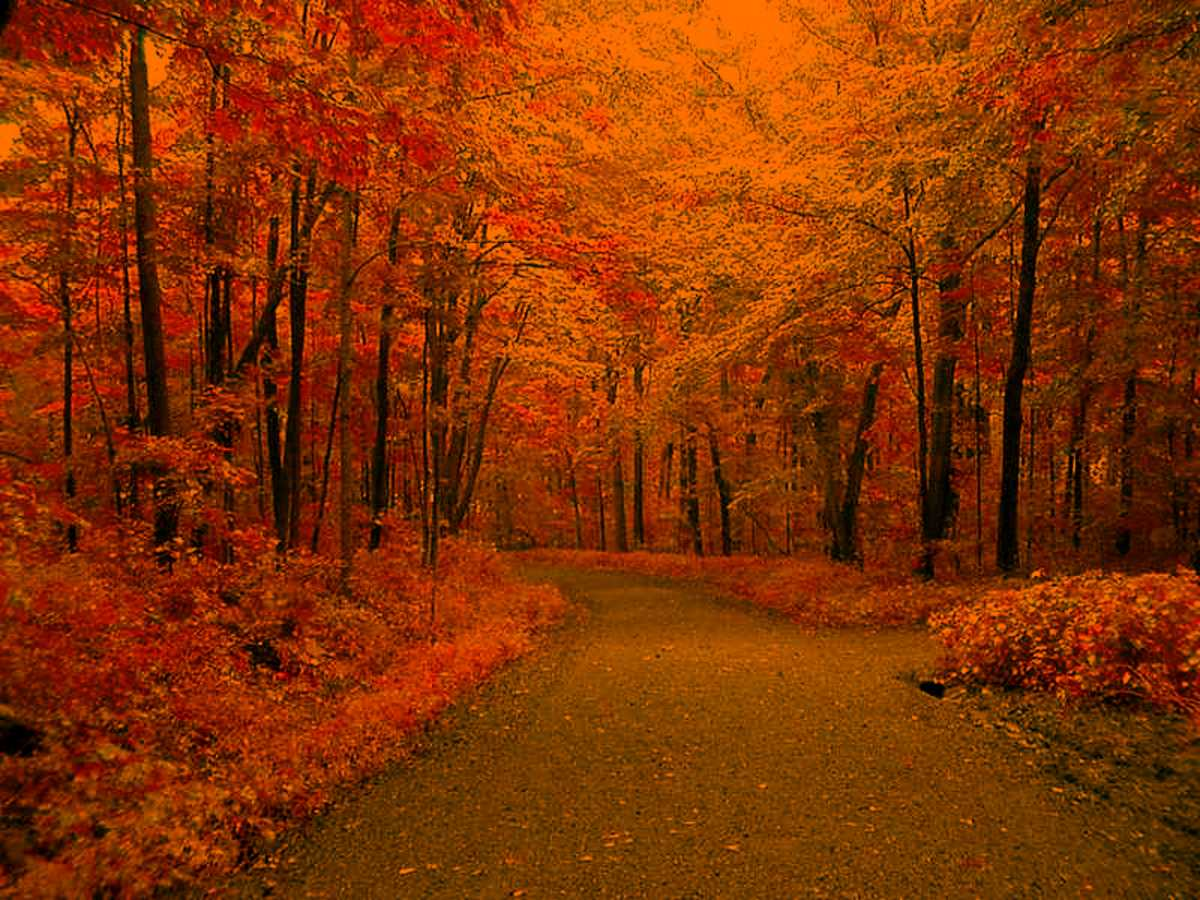 Autumn Road Background Image Wallpaper Or Texture Free