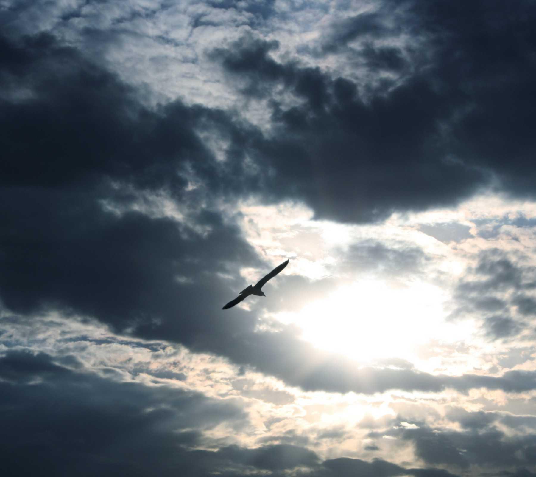 Amazing Birds Flying Twitter Background Photo With Tumblr Photography