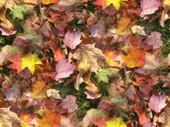 Background Wallpaper Image: Fall Leaves