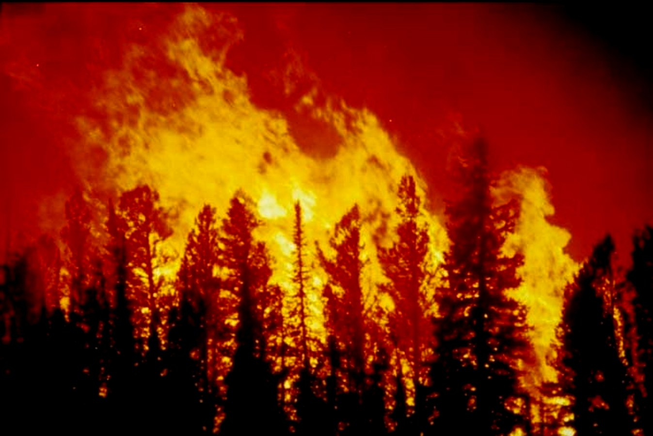 forest fire blm image background image wallpaper or