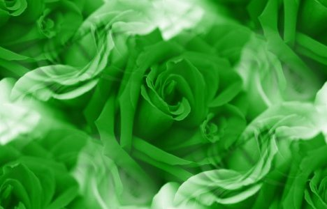 Green Roses Background Image, Wallpaper or Texture free ...