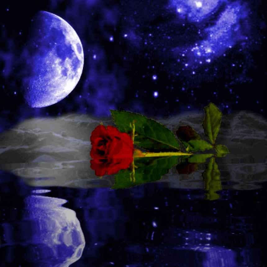 moonlight wallpaper. MySpace Moonlight Rose