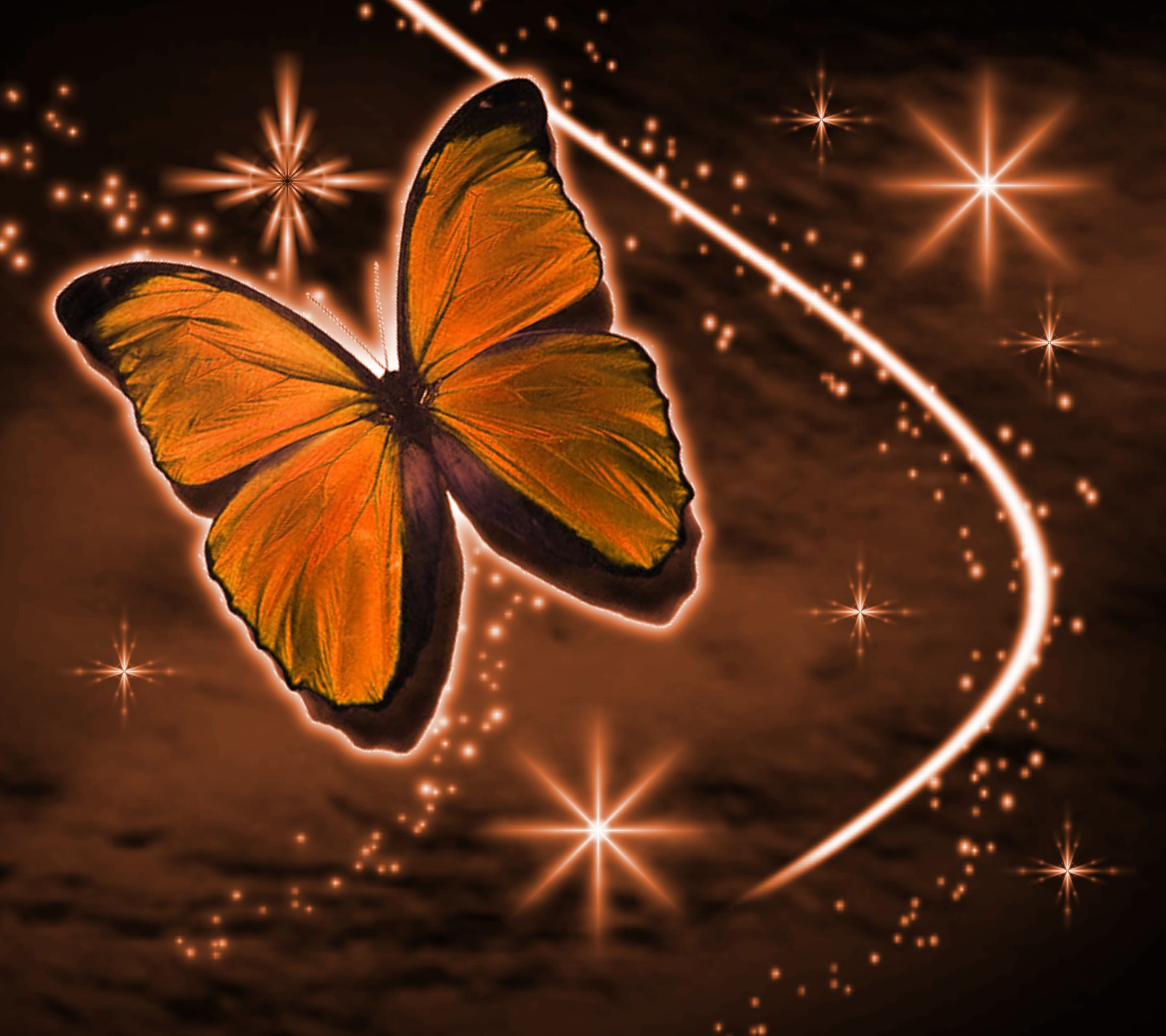 Aninimal Book: Orange Butterfly With Stars Background 1800x1600 ...