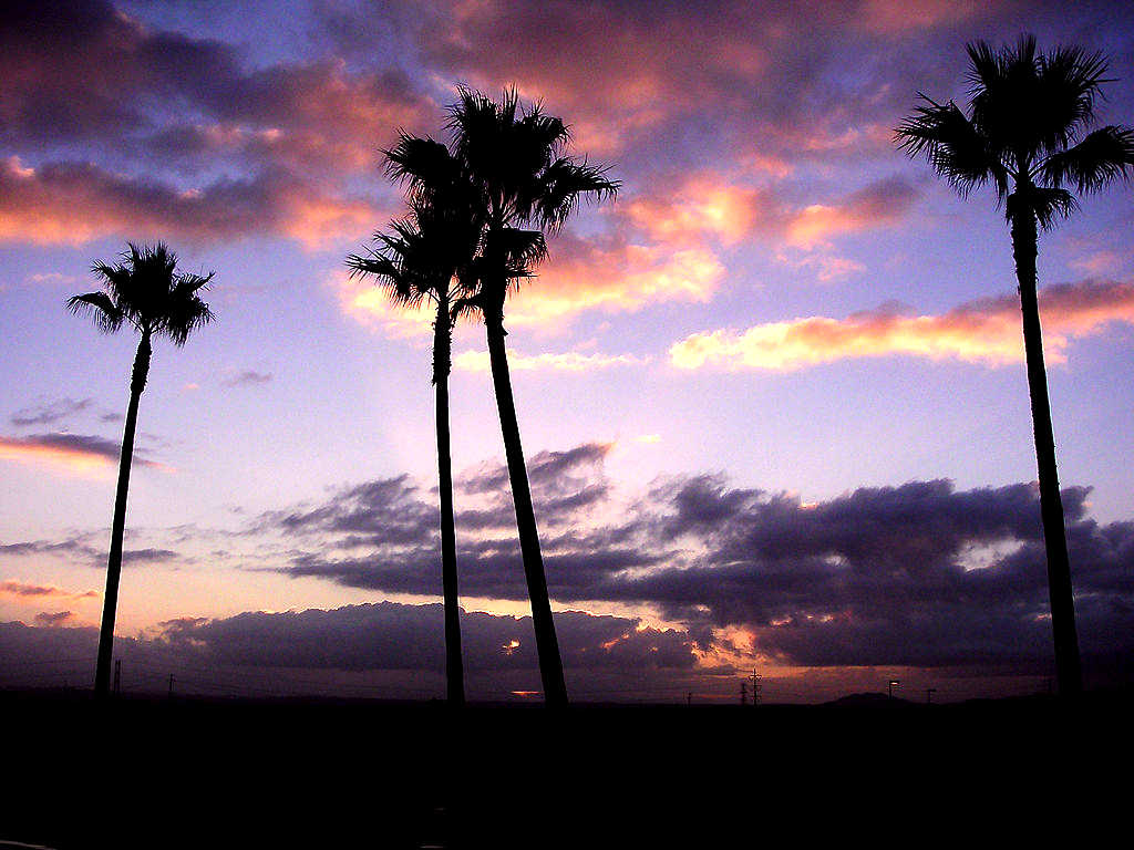 MySpace Palm Trees At Sunset Background | Twitter Backgrounds | Wallpaper