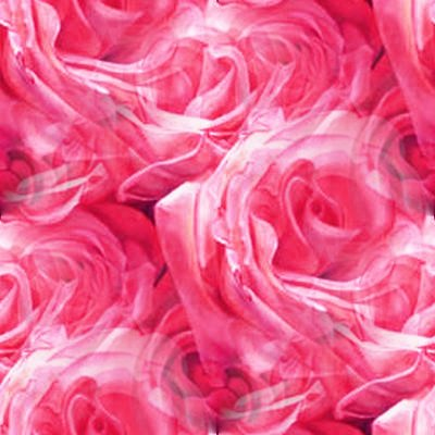 wallpaper pink rose. MySpace Pink Roses Background