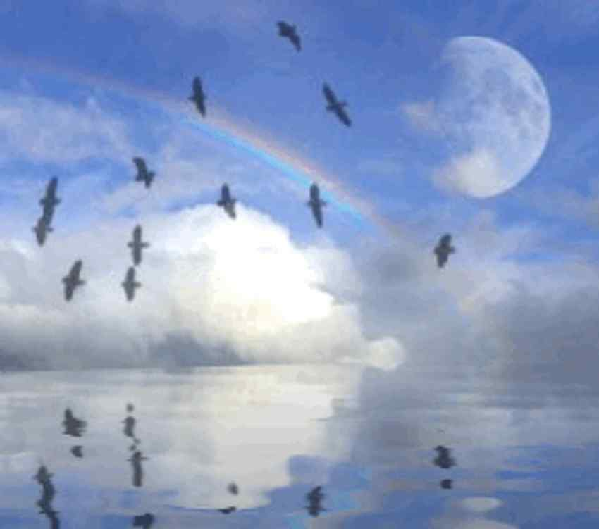 rainbow moon and bird reflections background image  wallpaper or texture free for any web page
