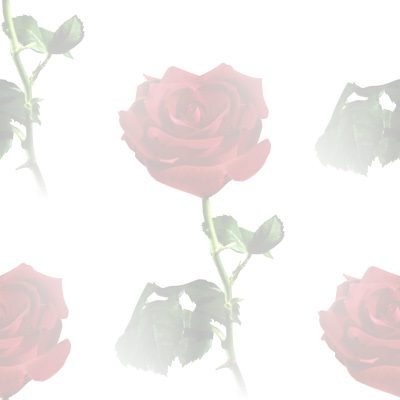 Red Rose Watermark Background Image, Wallpaper or Texture free for any ...: www.zingerbug.com/background.php?MyFile=red_rose_watermark.php&ID...